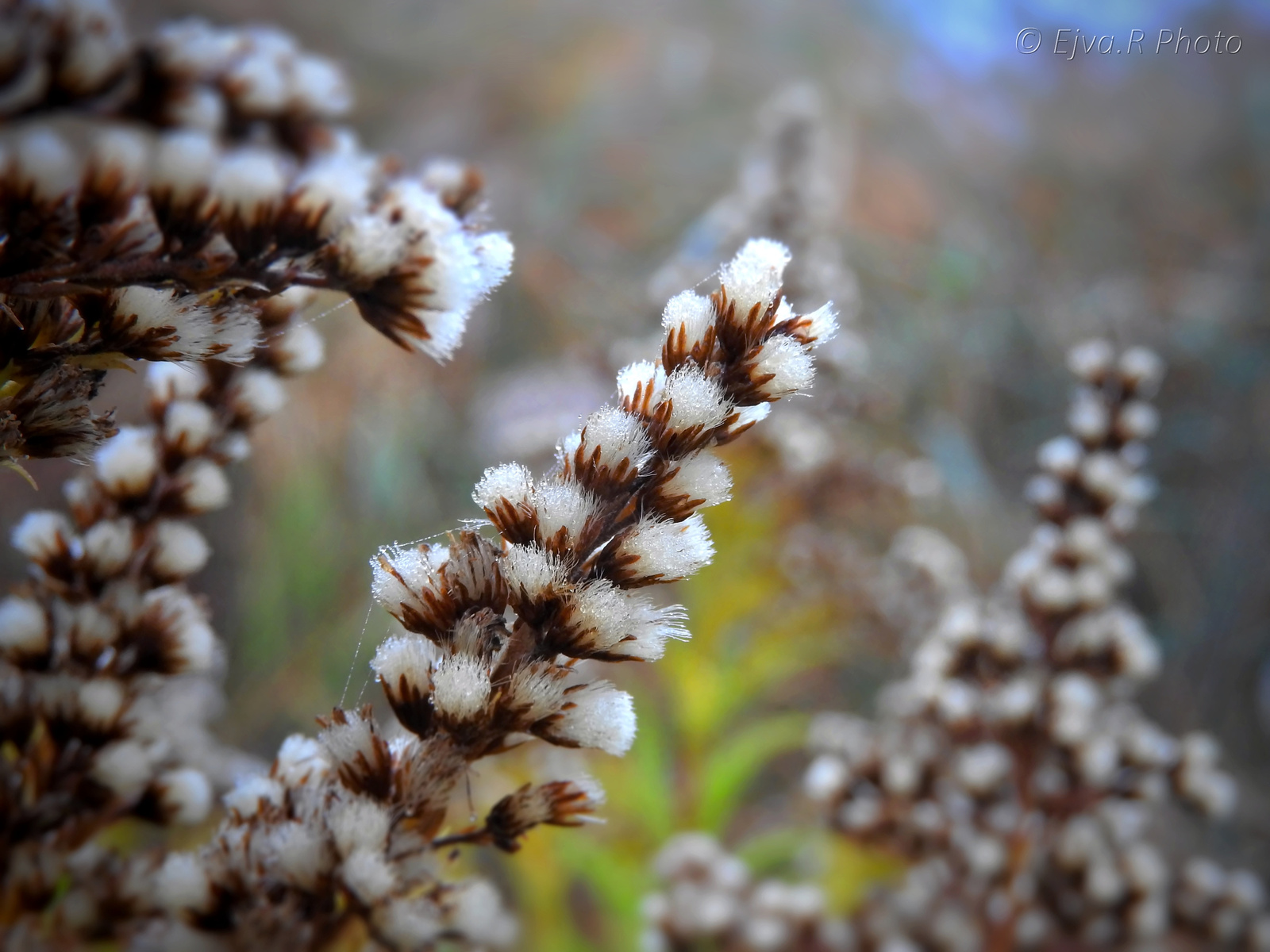 Őszi növények