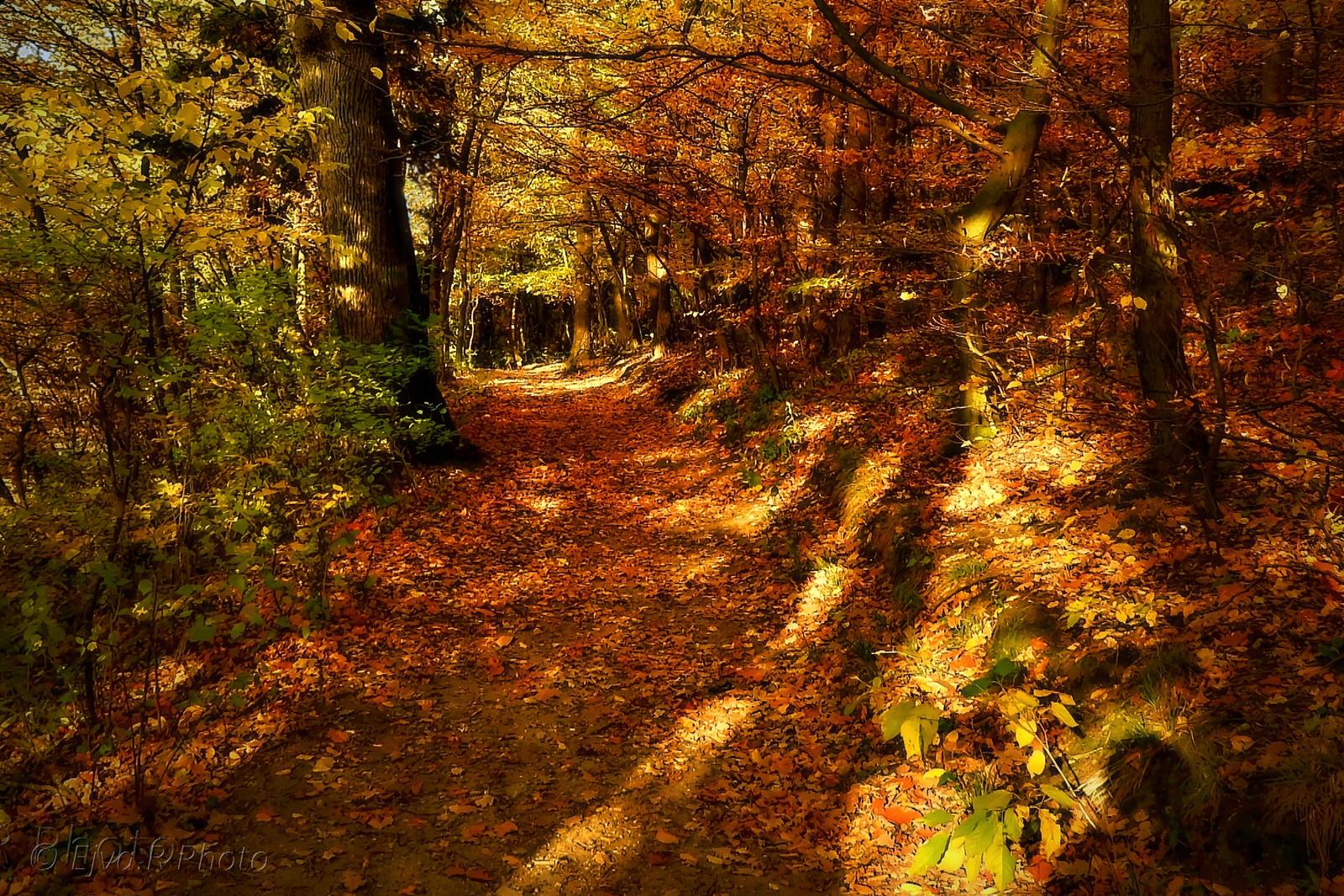 Őszi séta