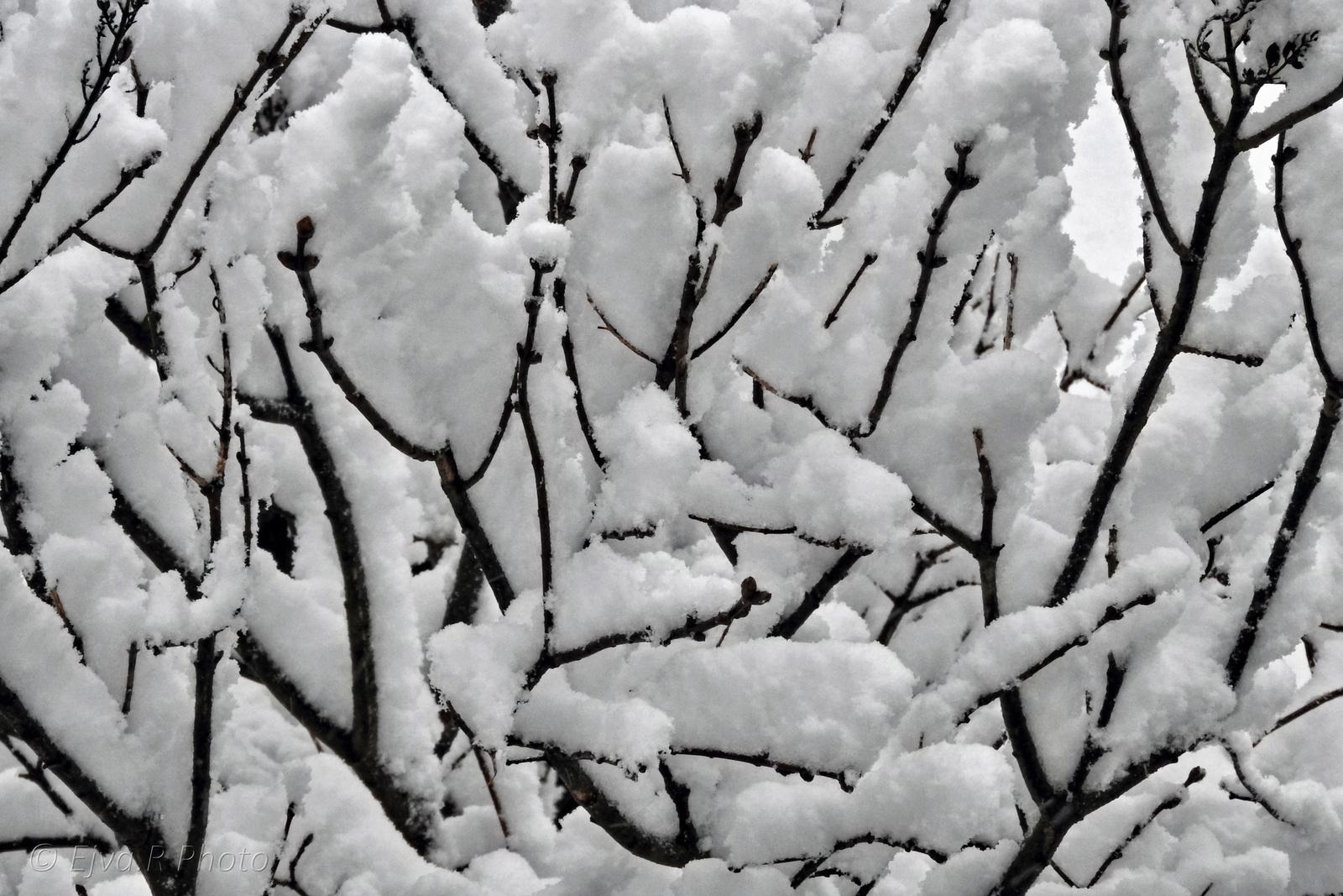 Novemberi hó Minta