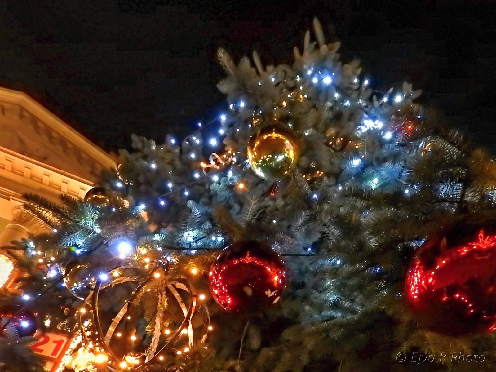 Karácsonyfa Sopron