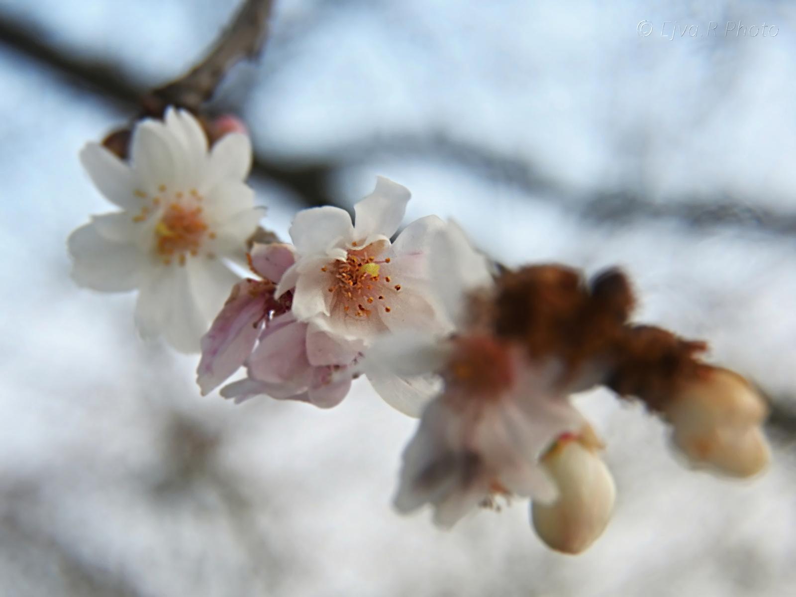 Tavasz a télben