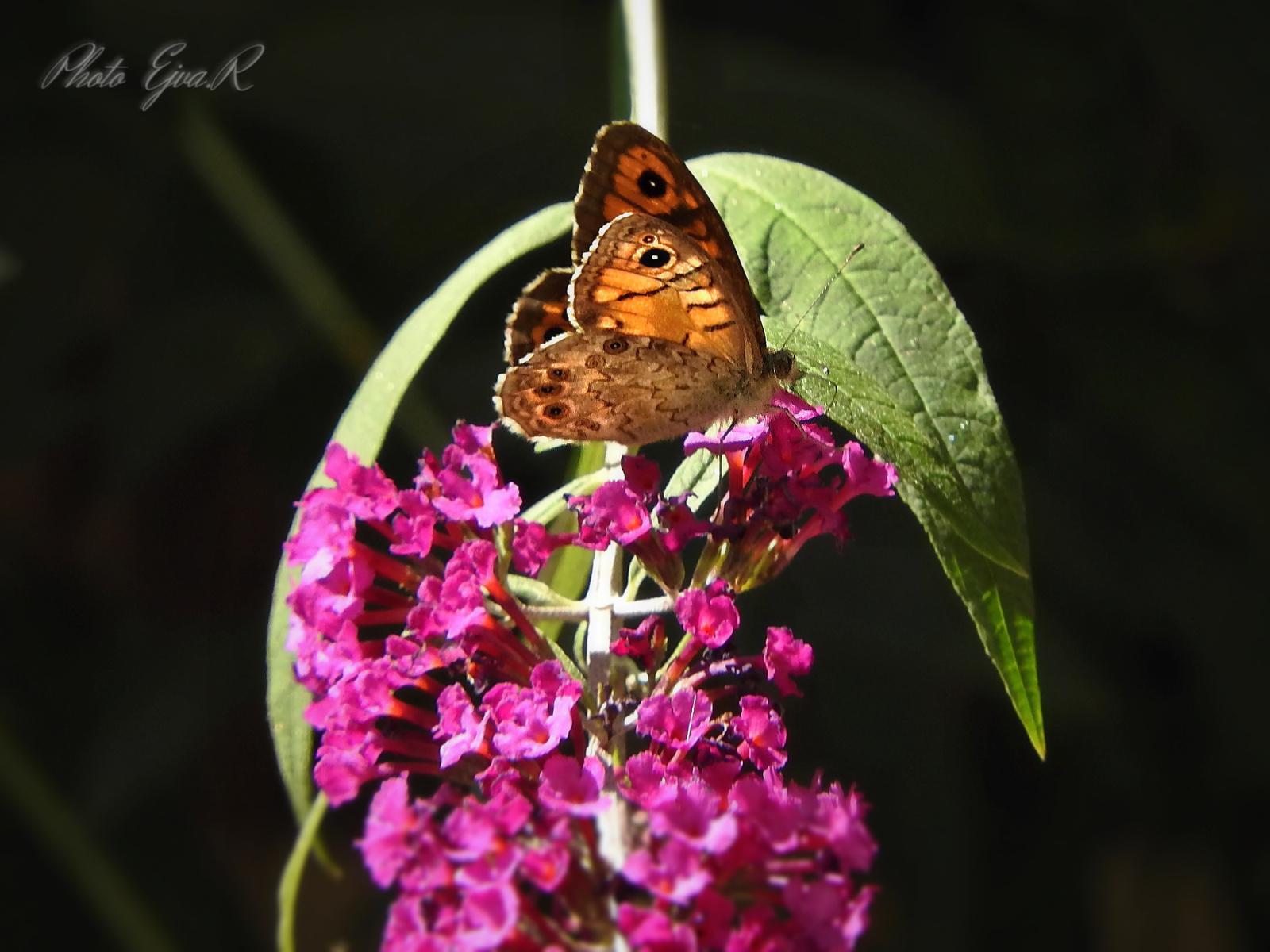 Pillangó / Ősz