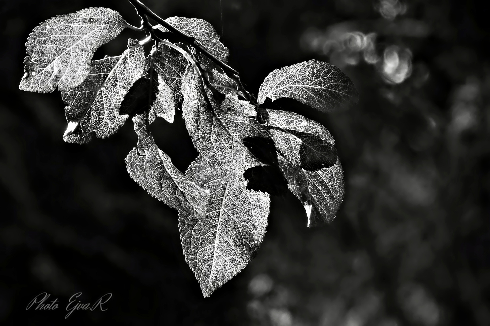 Monokróm ősz
