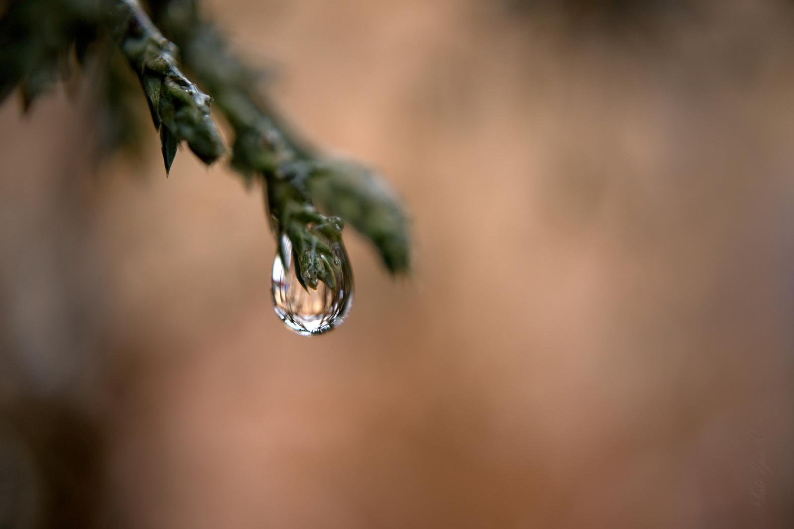 Egy csepp víz