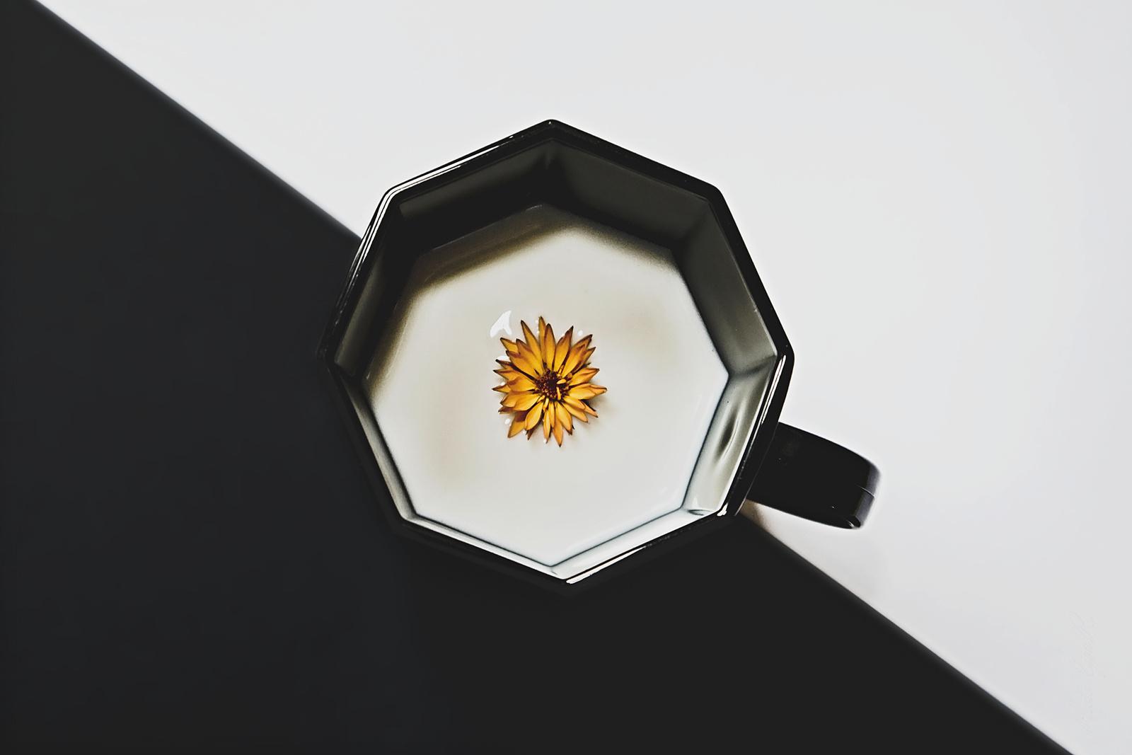 Virág a csészében