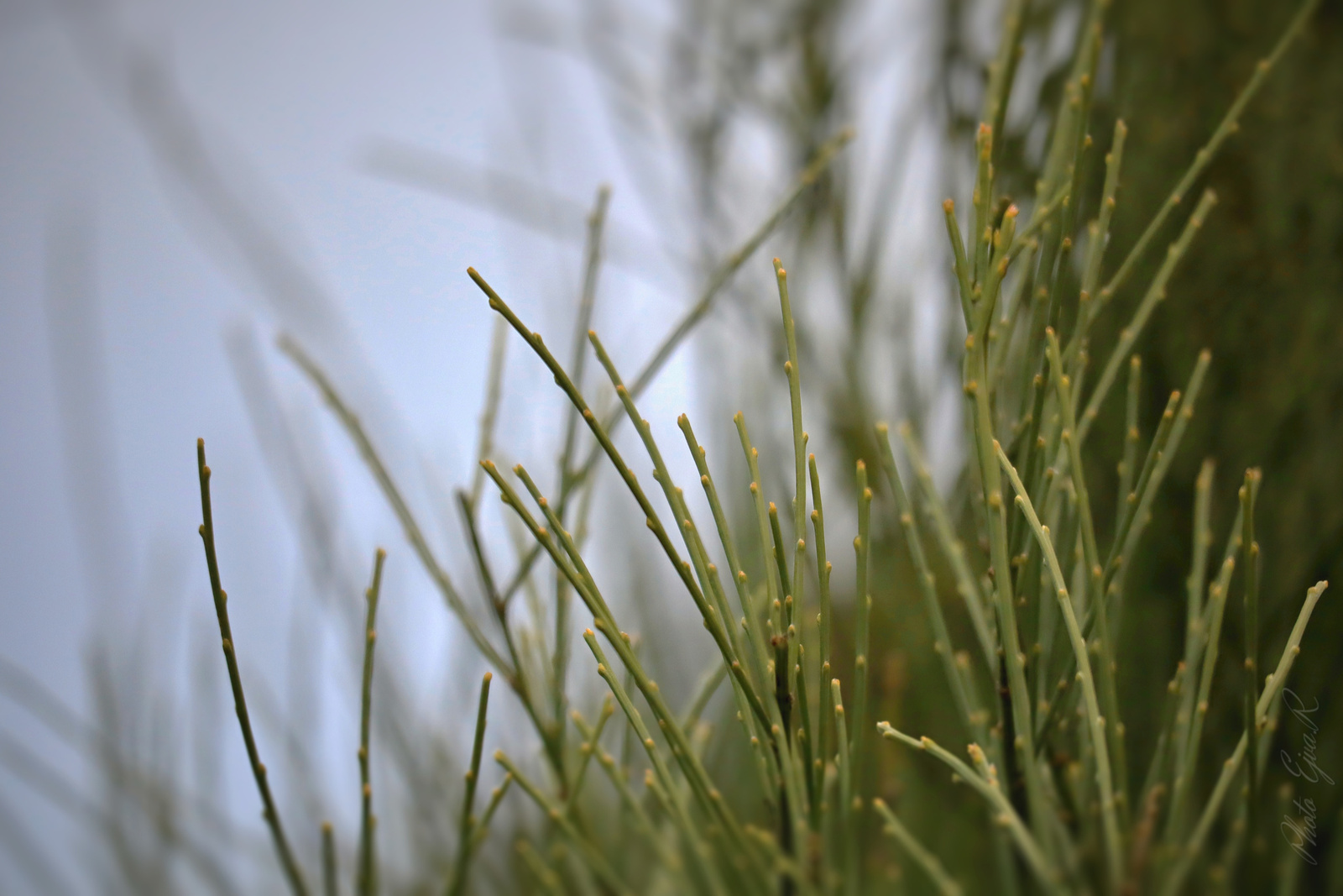 Növény Tél