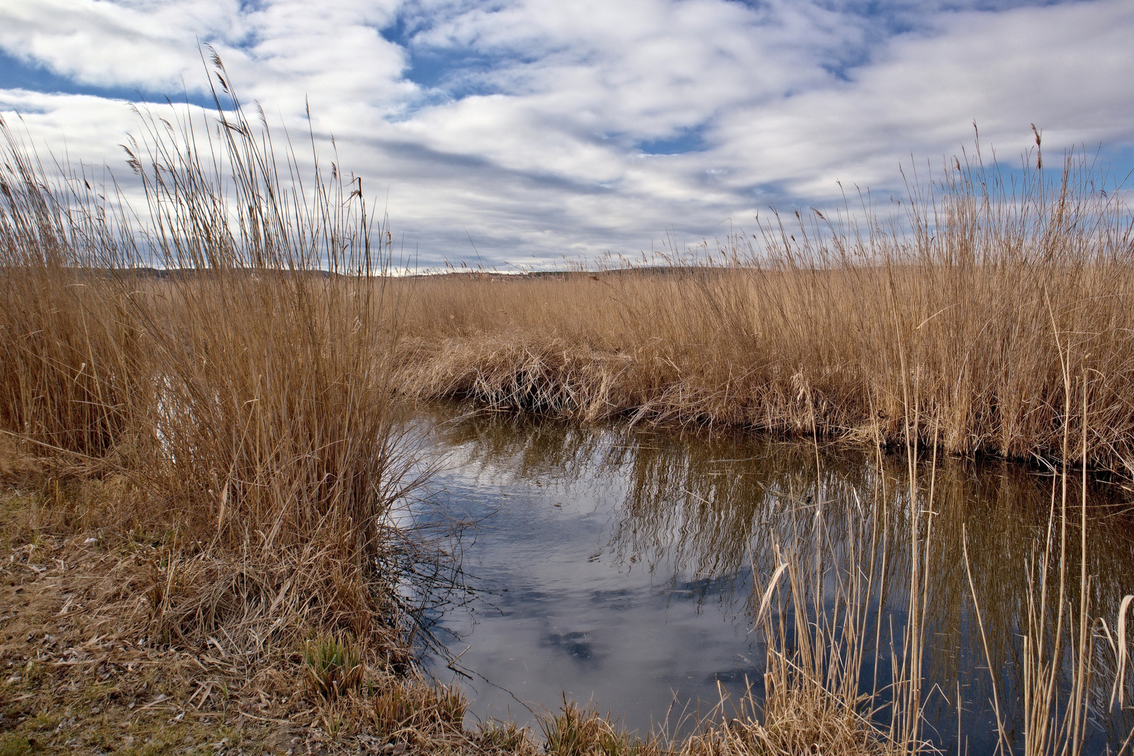 Fertő tó csatorna tél nád