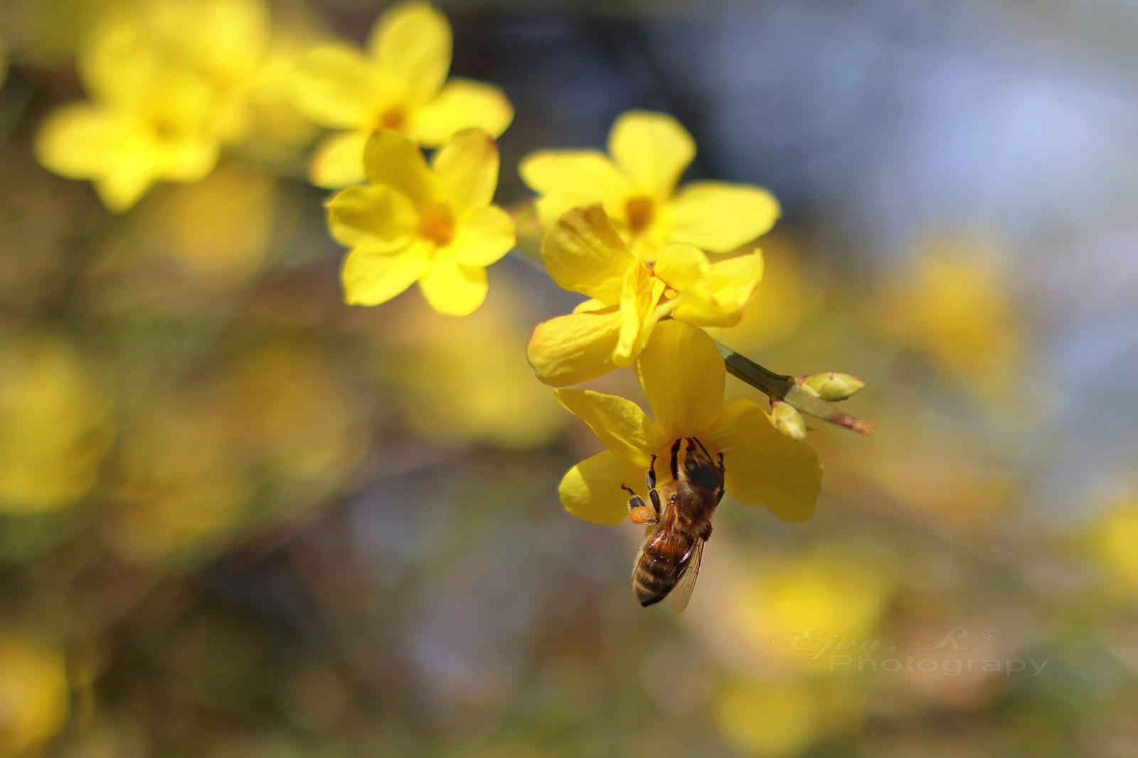 Háziméh Tavasz Virágok