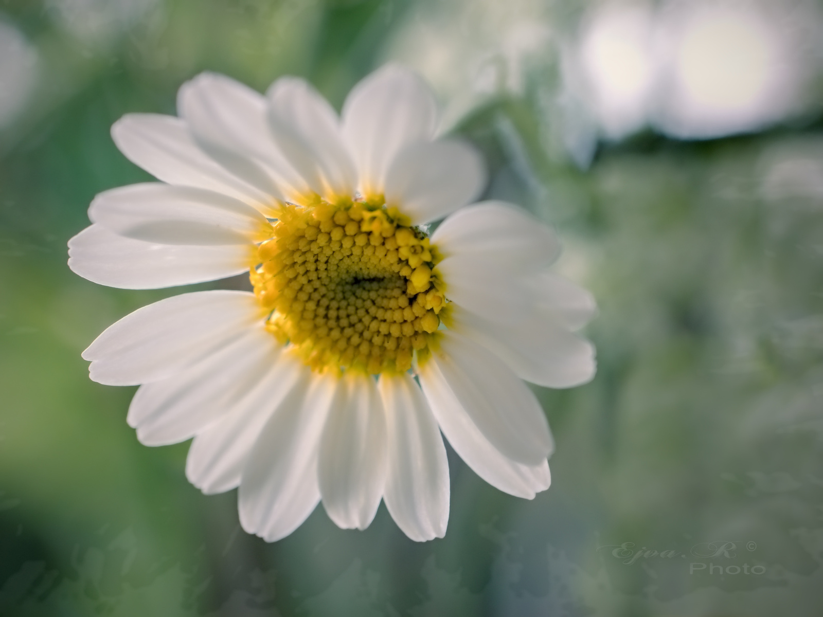 Virág Tavasz