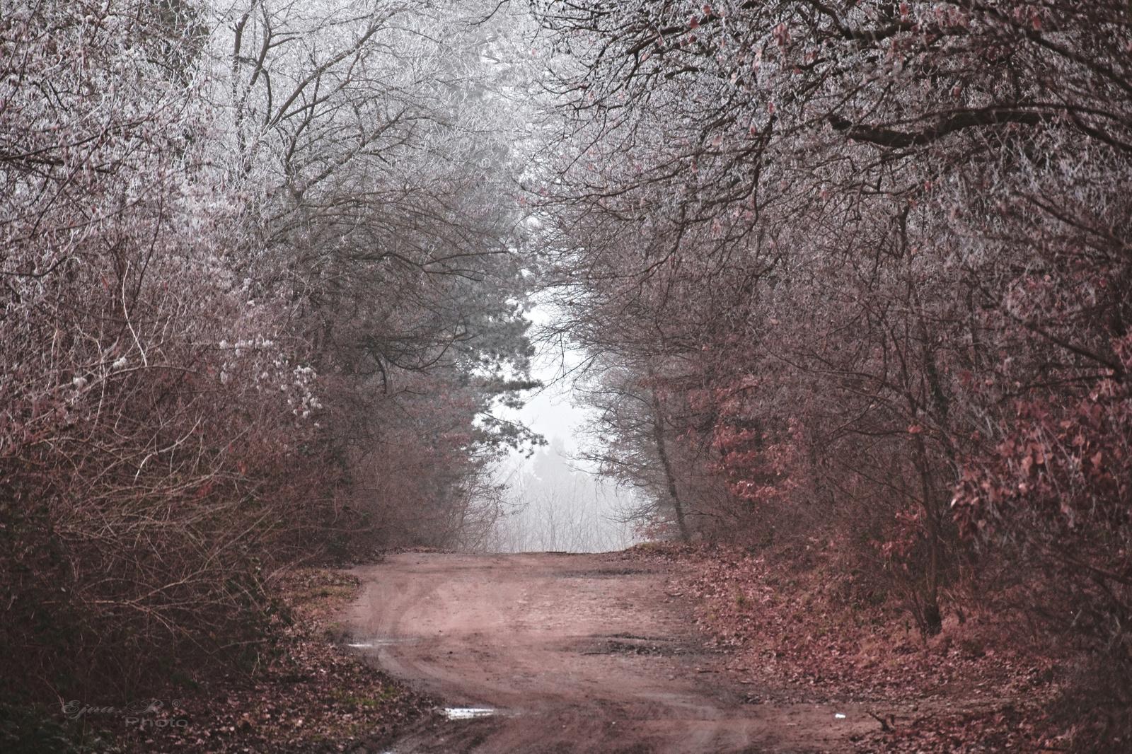 ködös zúzmarás erdő