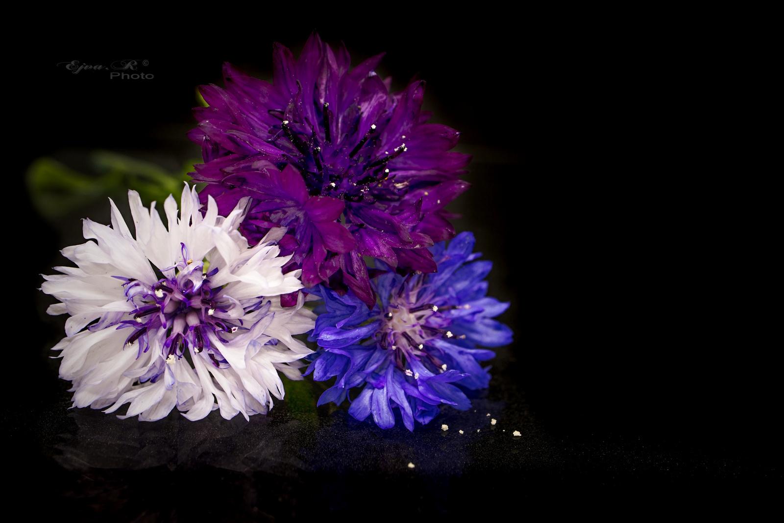 Virágok fekete háttér