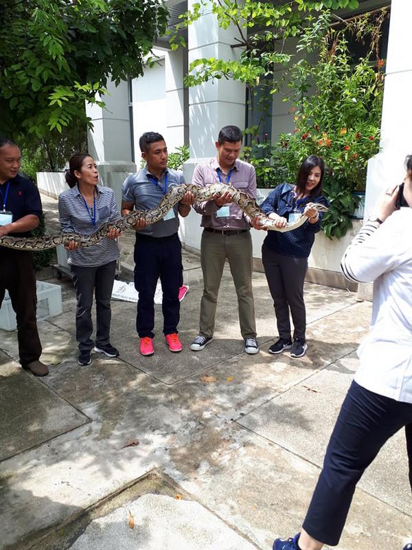 Továbbképzés miatt más országokból érkezett delegációk gyakorolták a kígyók befogását, köztük e pitonét is.