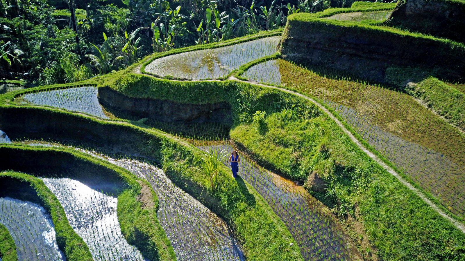 Tegalalang rizsterasz