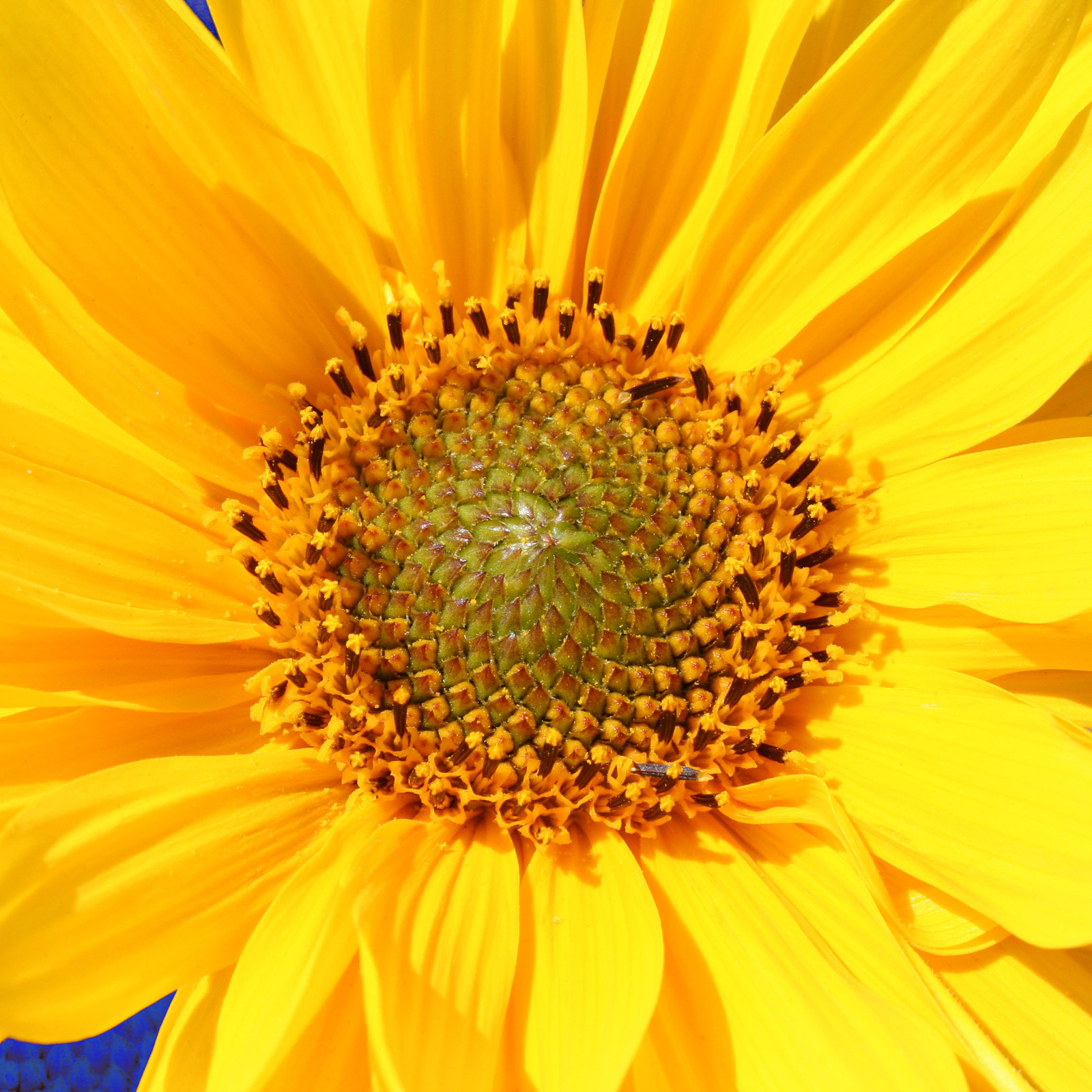 kék és sárga