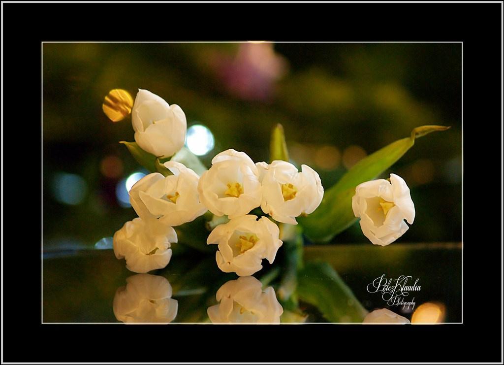 szülinapi virágok szülinapi virágok karácsonyi fényekkel   kisklau   indafoto.hu szülinapi virágok