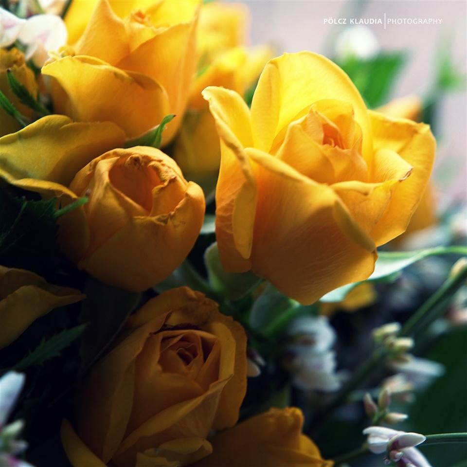 szülinapi virágok szülinapi virágok a családtól   kisklau   indafoto.hu szülinapi virágok