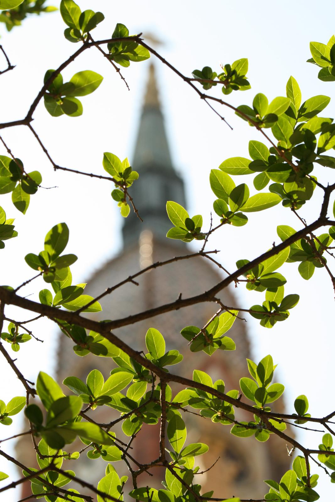 Tavaszi torony