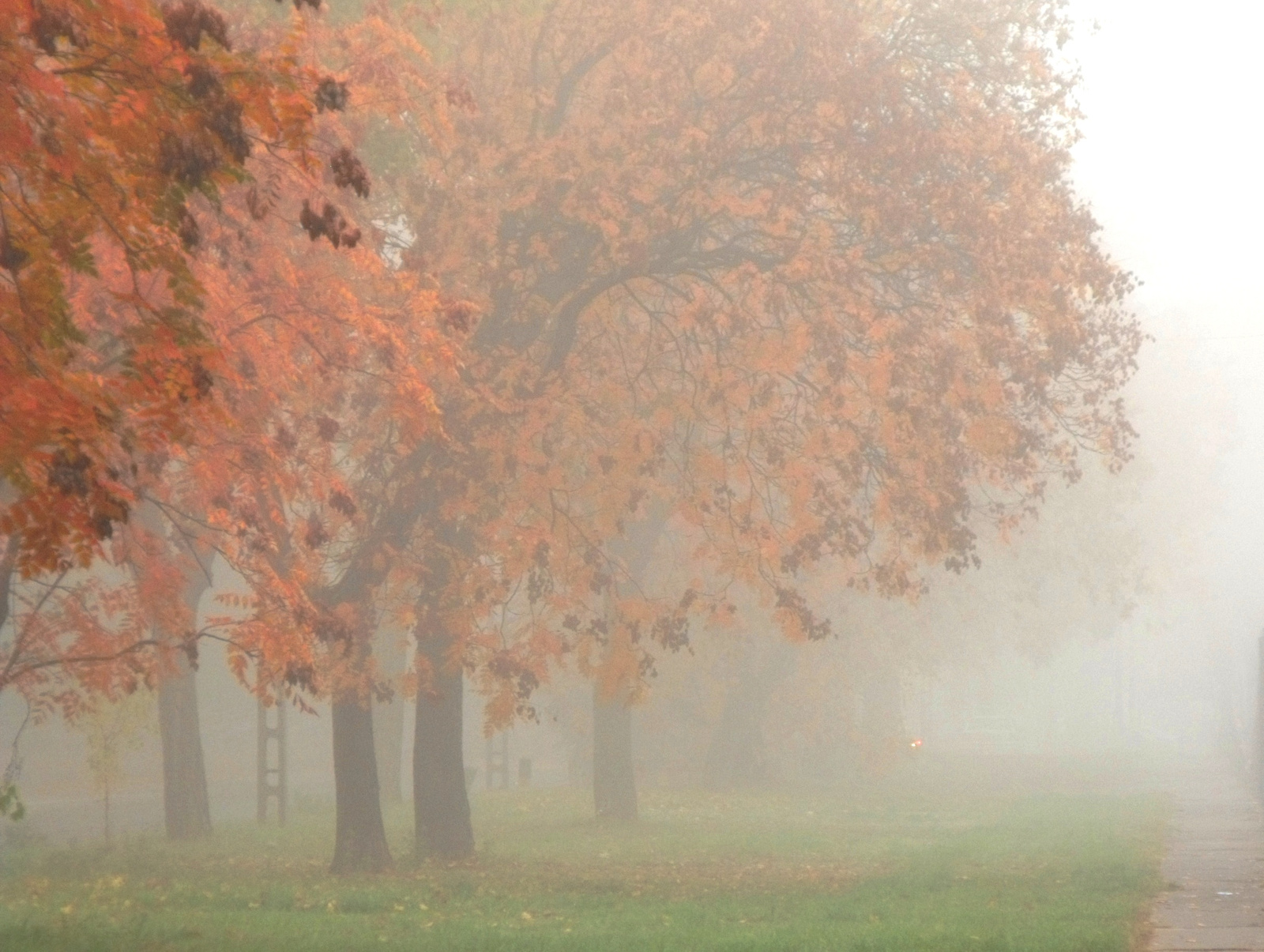 Változatok őszre, ködre 4.