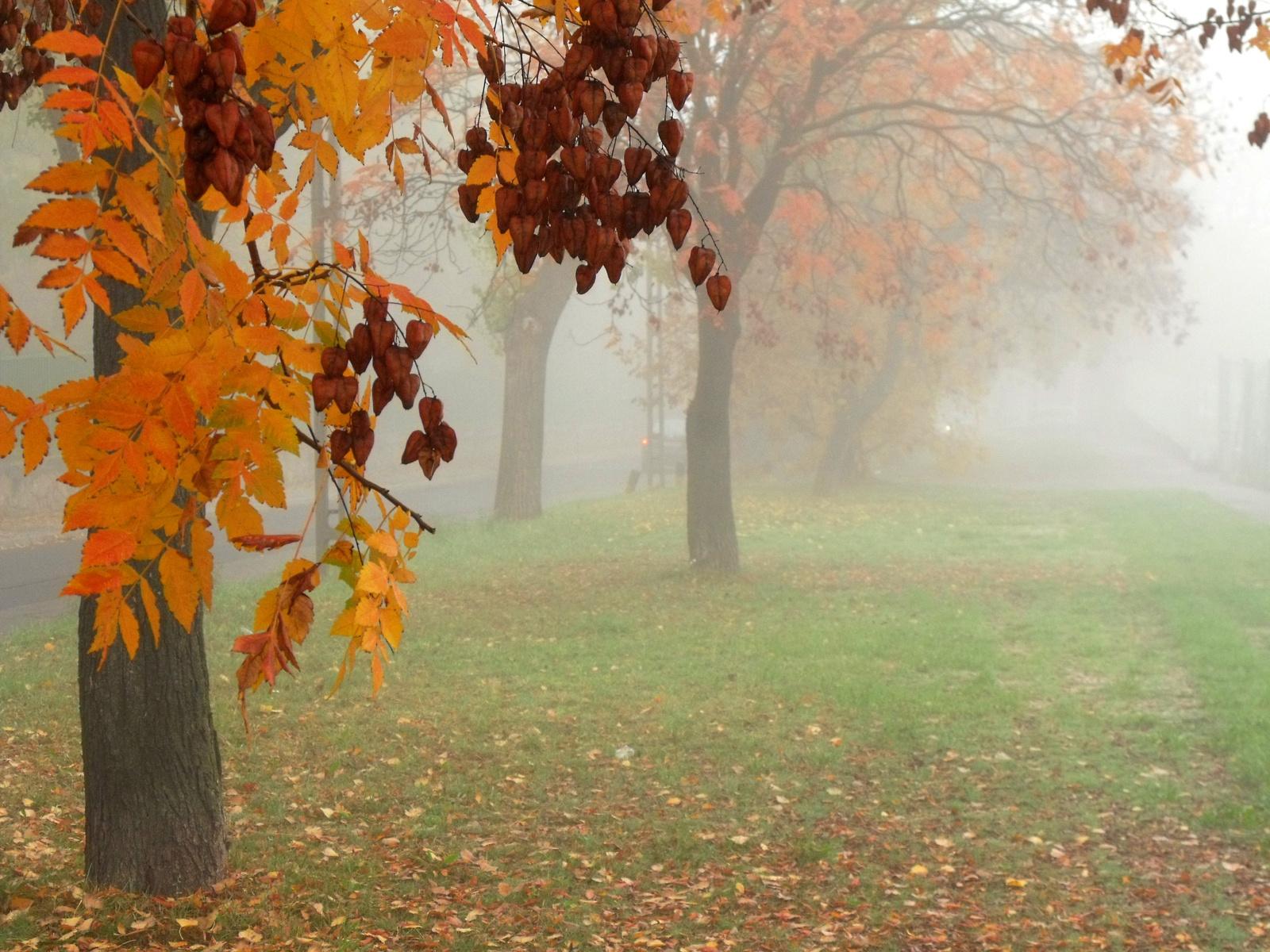 Változatok őszre ködre 2.