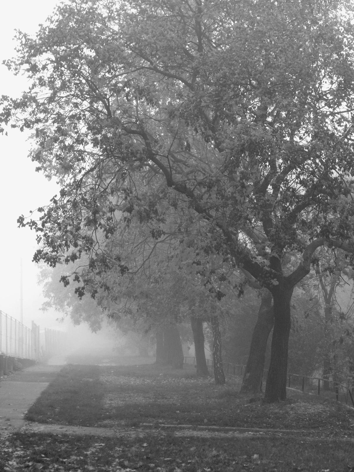 Változatok őszre ködre.