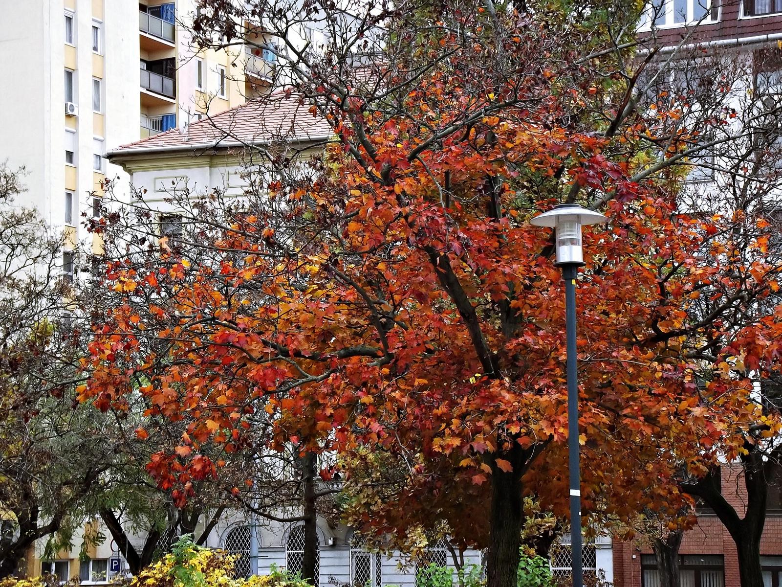 rozsdás ősz