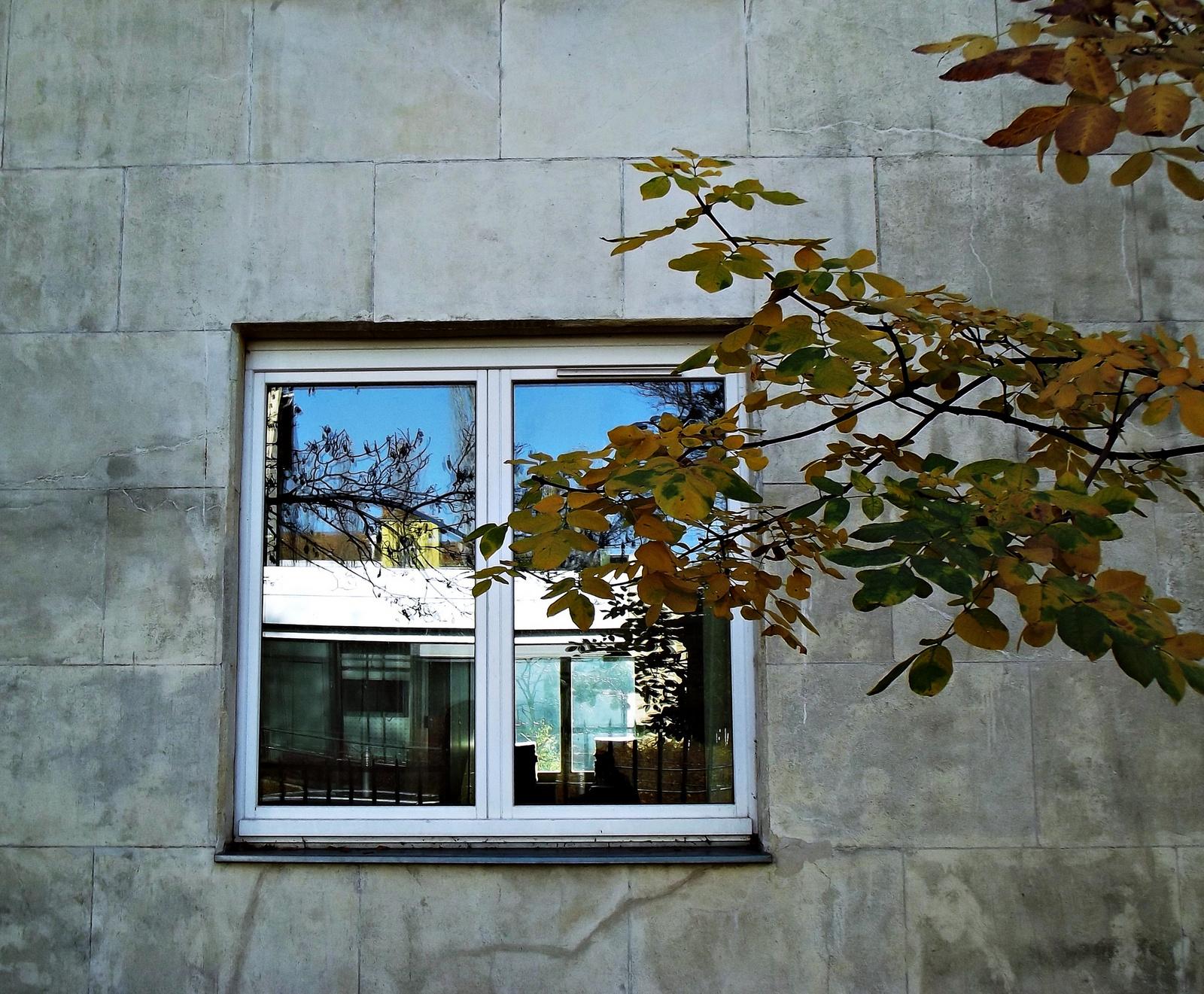 őszi ablak