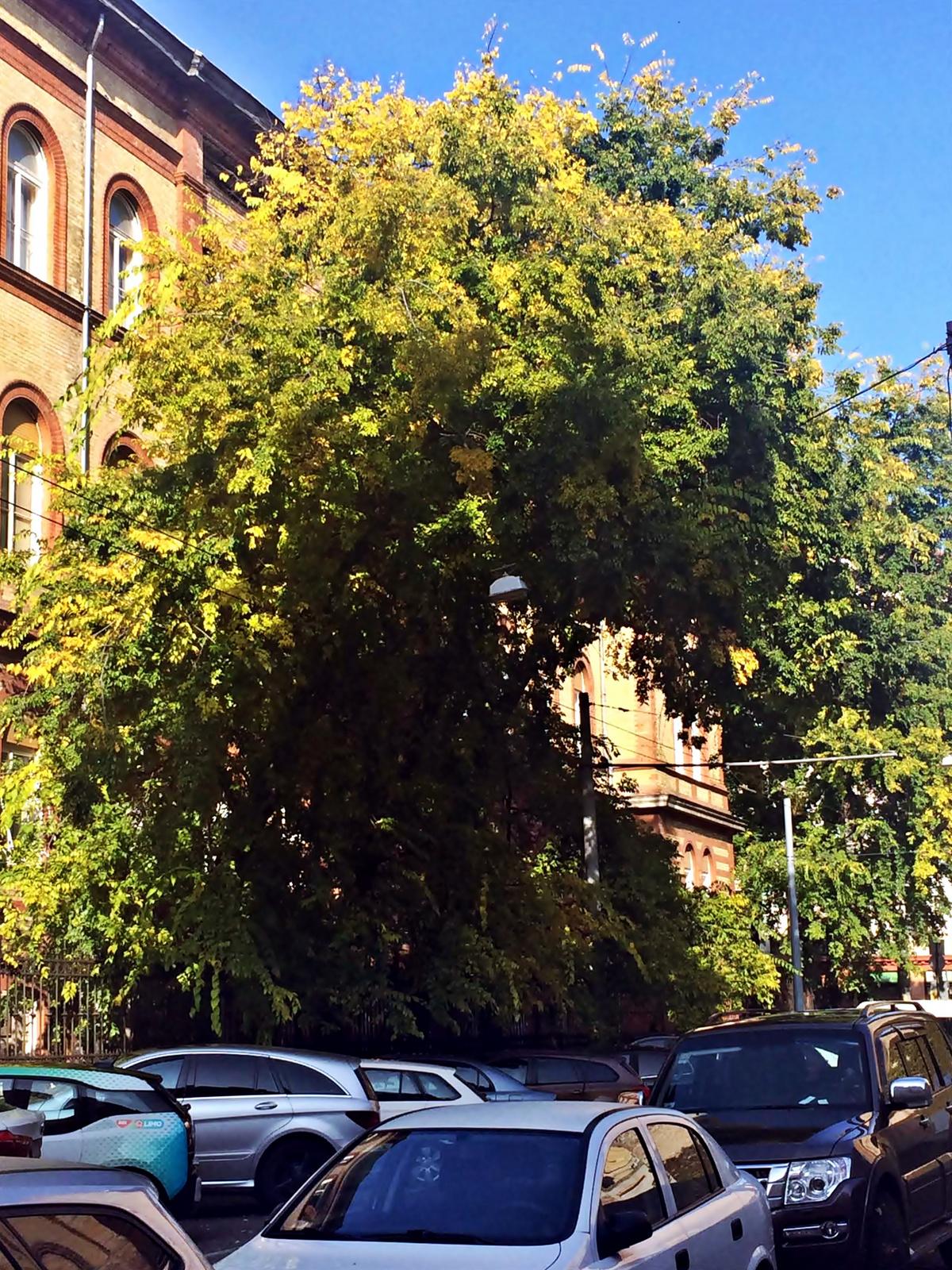 városi ősz