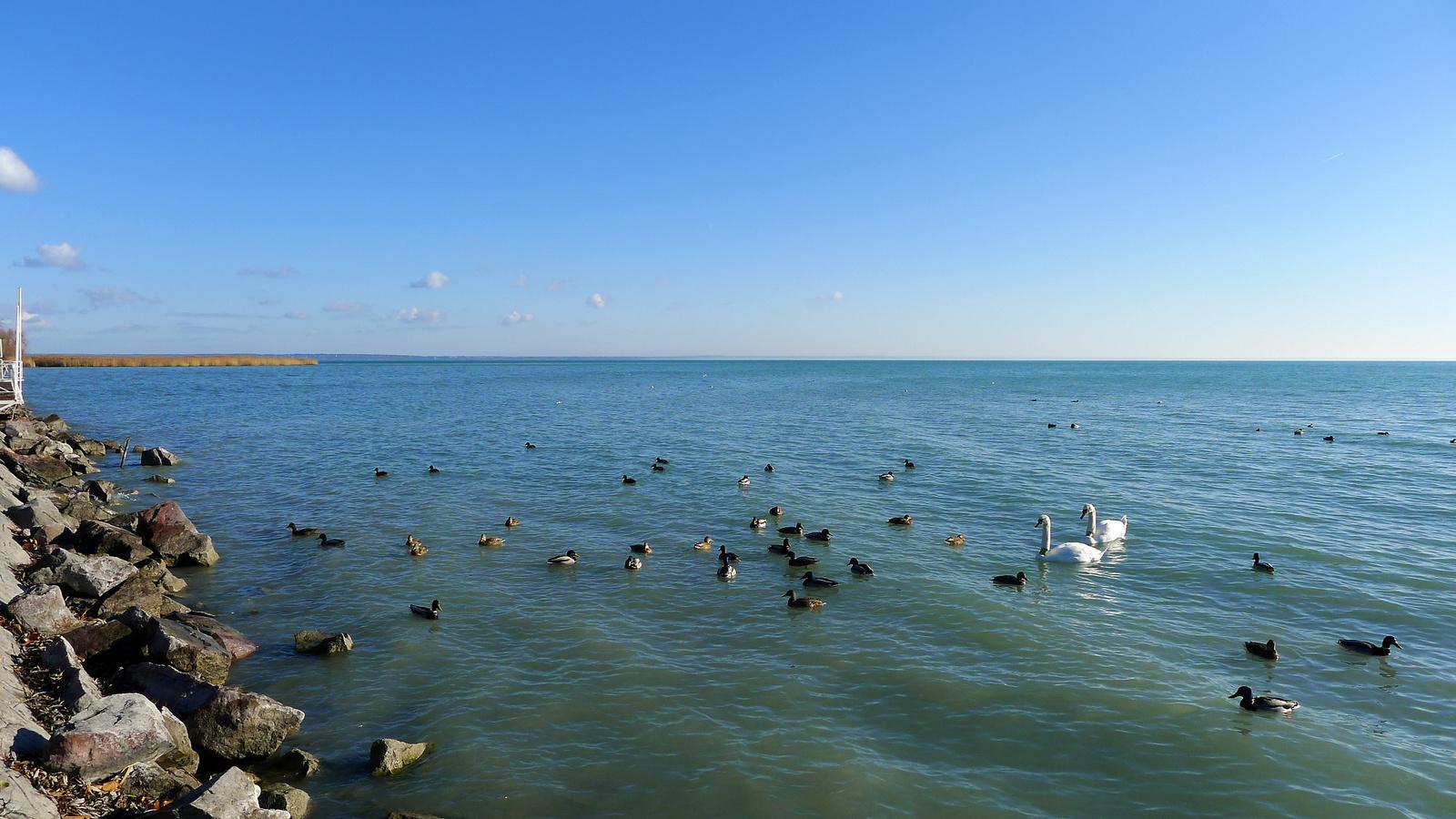Élet a part mentén