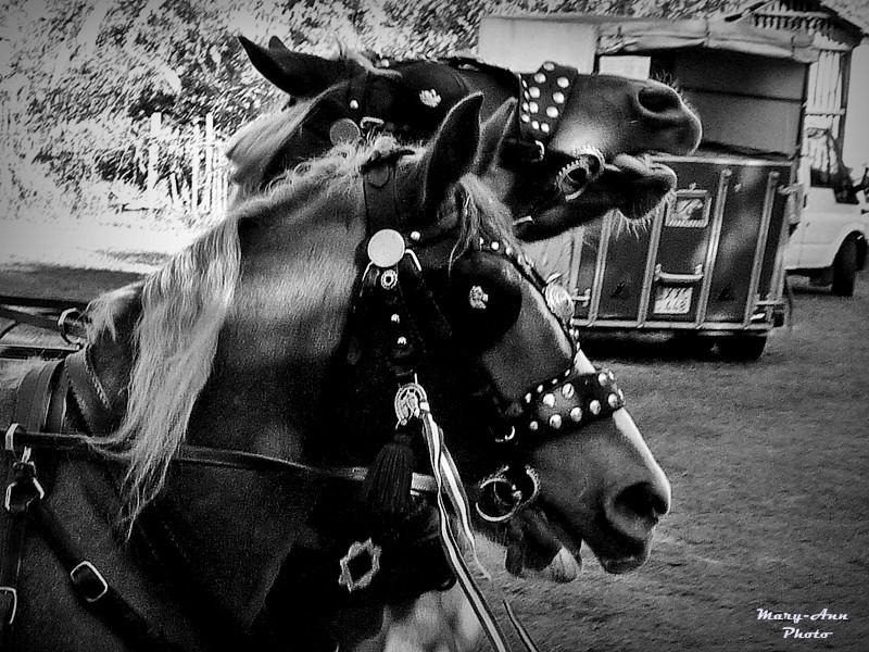 Domaszék lovasnap 112