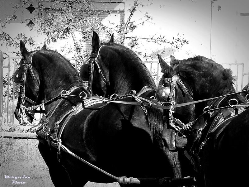 Domaszék lovasnap 155