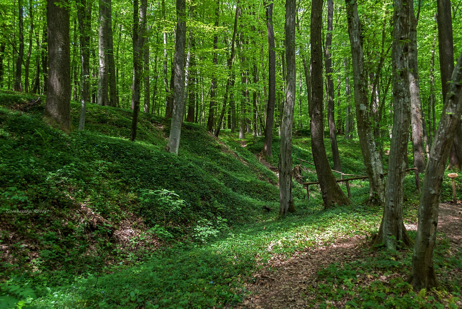 Erdőben