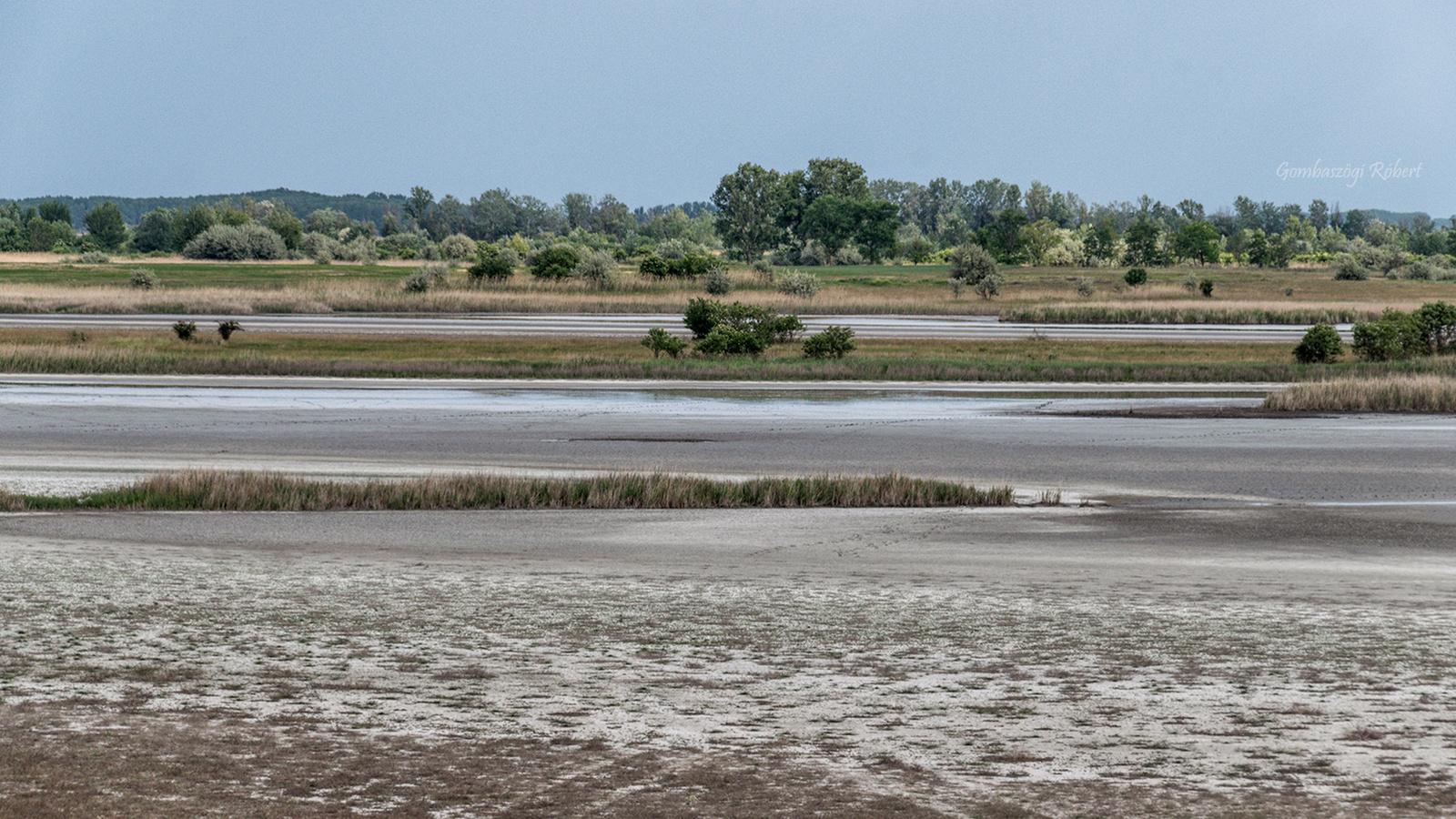Száradó tó
