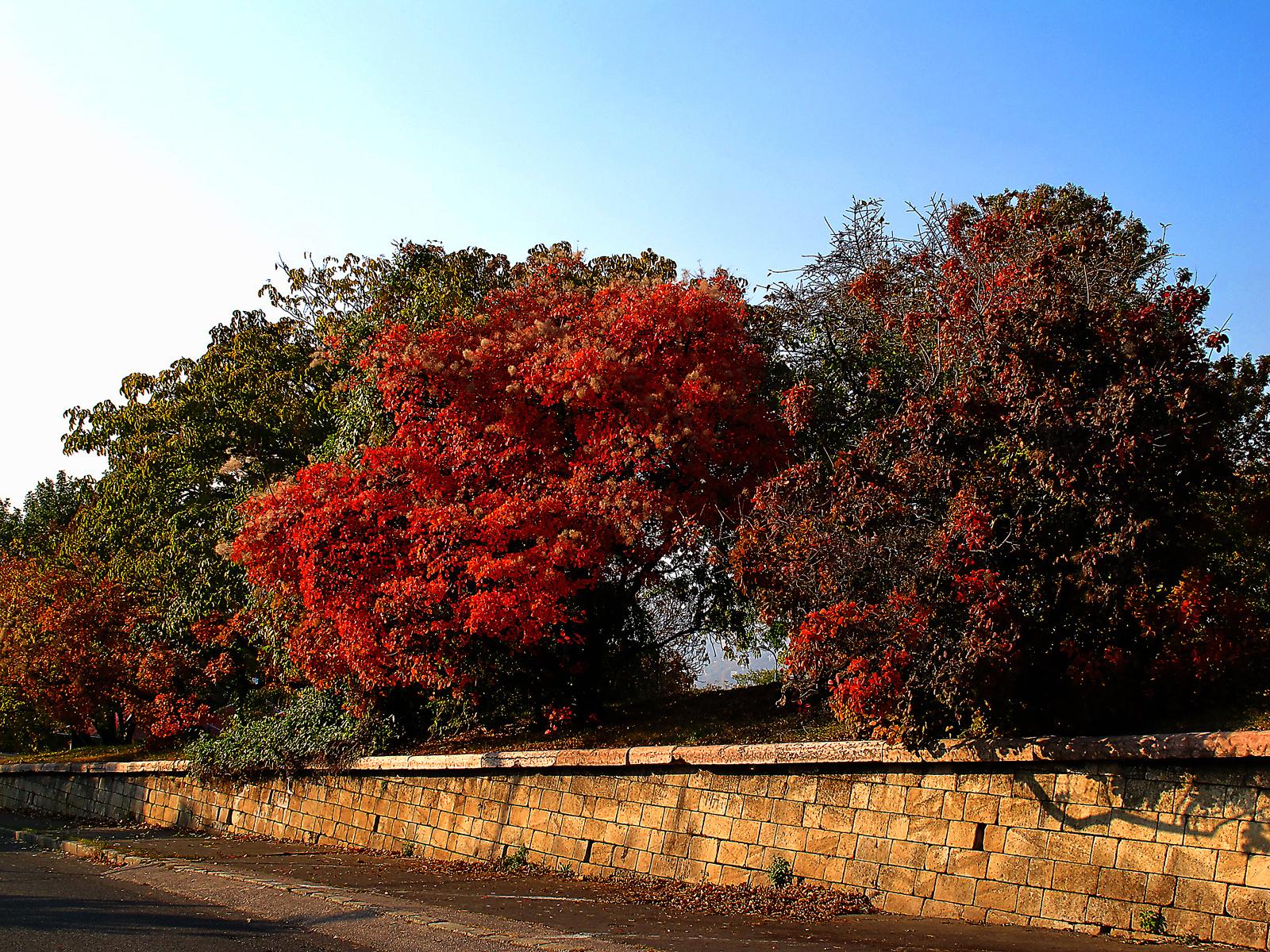 őszi emlék 4