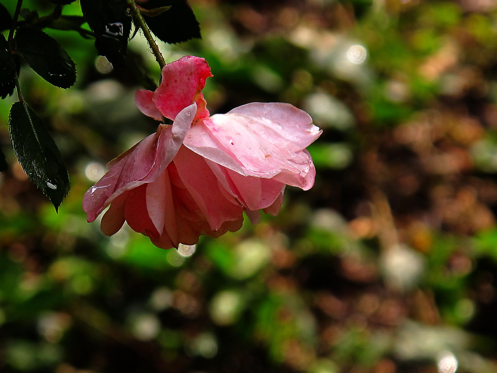 tavasz virágai 73
