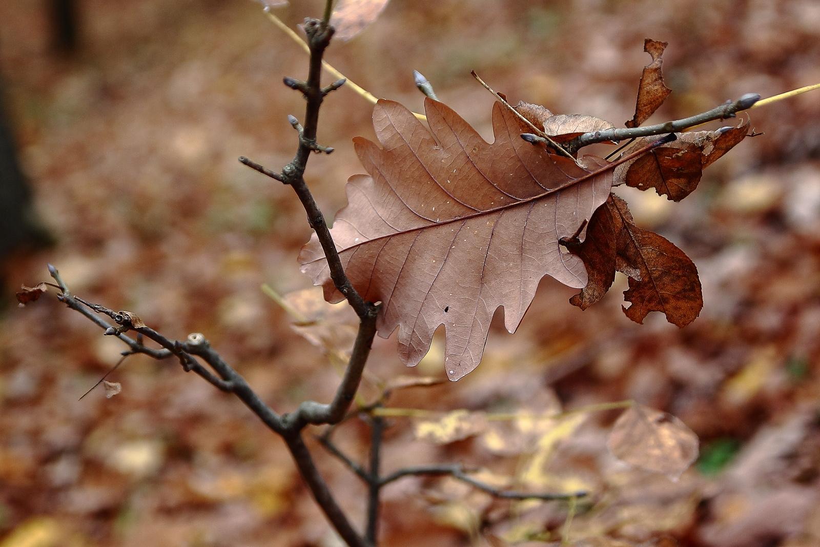 Fenn akadt levelek