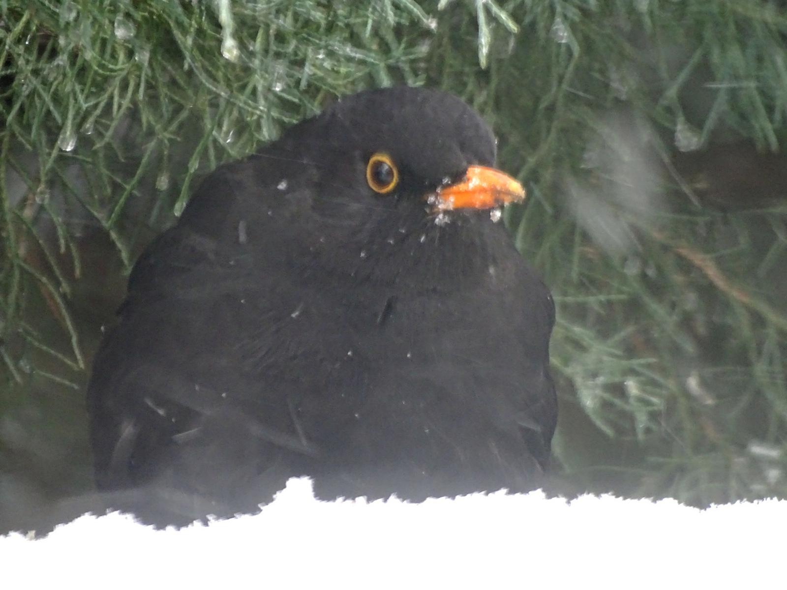 Hófúvásban