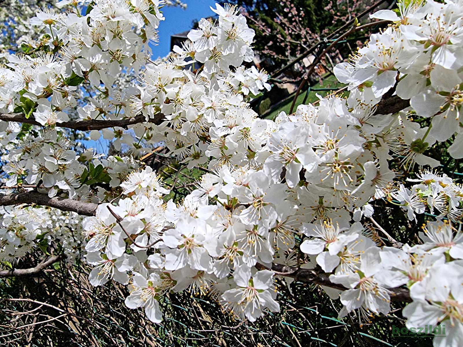 Virágszirmok 6