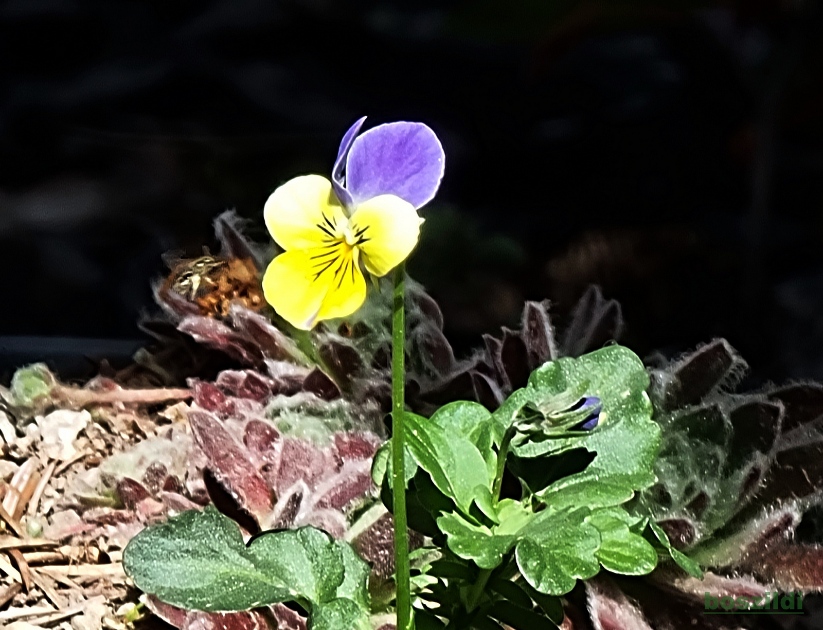 Virág 1