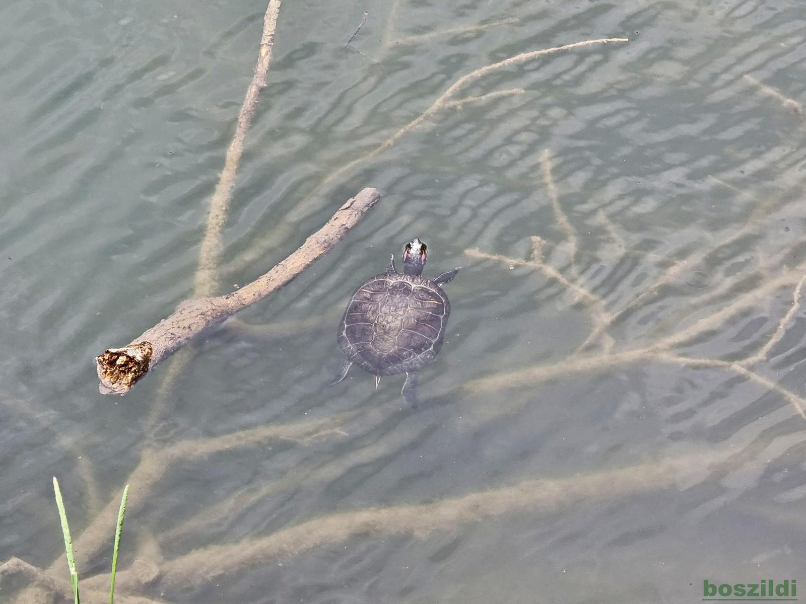 Lillafüred, teknős