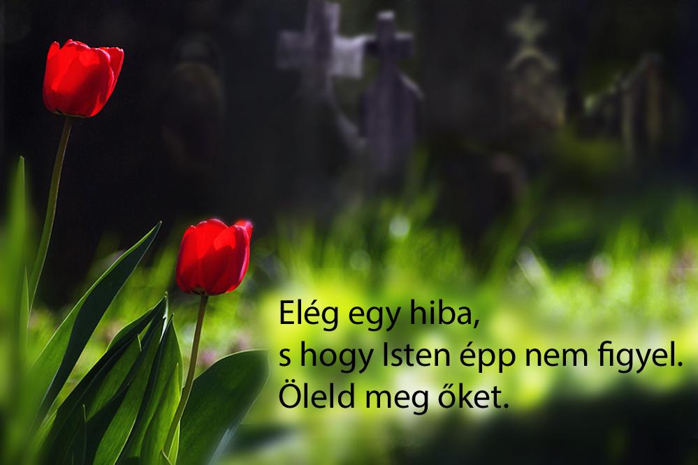 haikuk 38