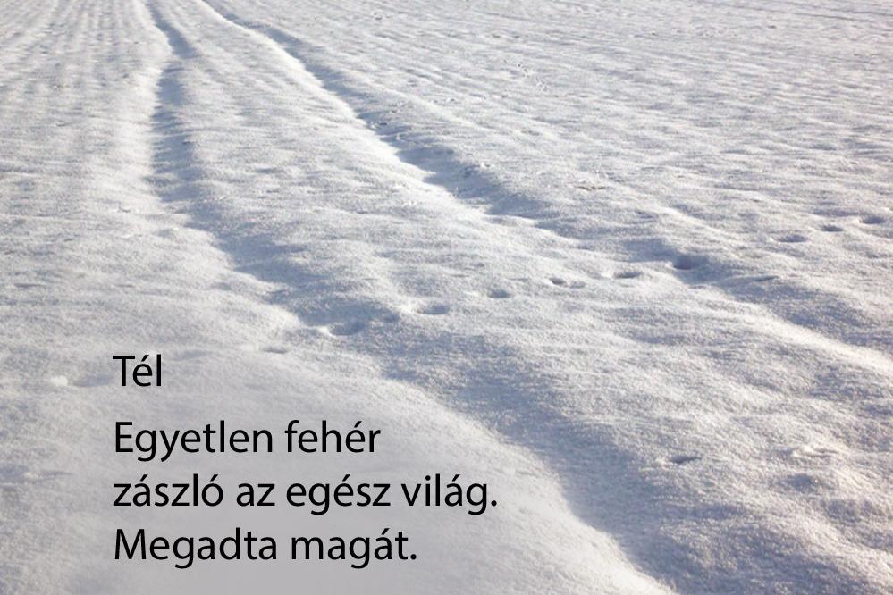 haikuk 60