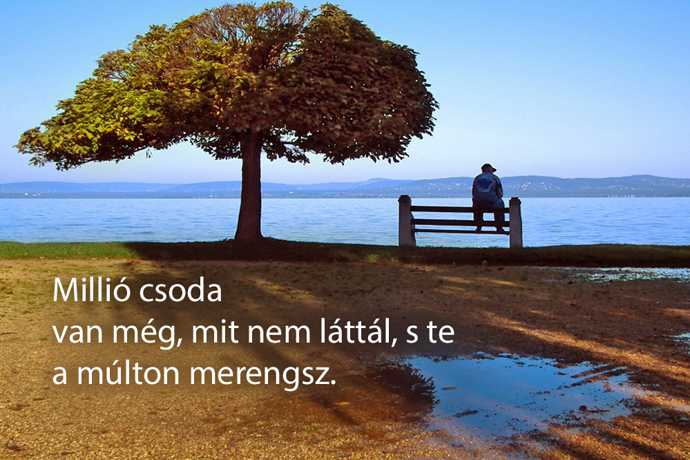 haikuk 71