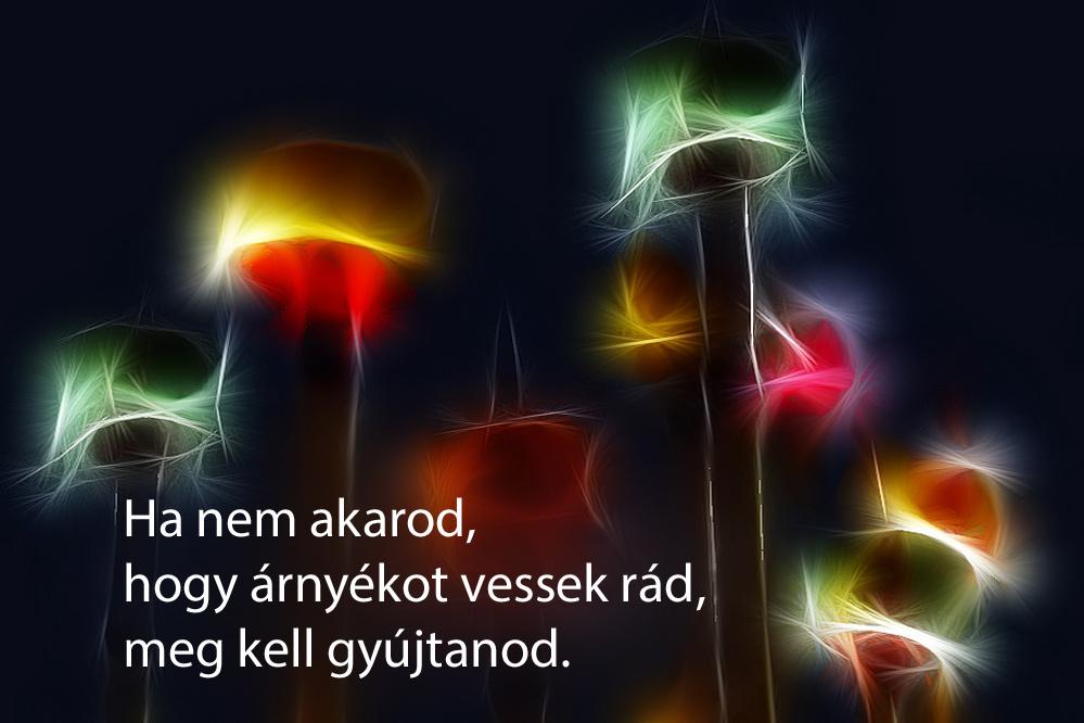 haikuk 92