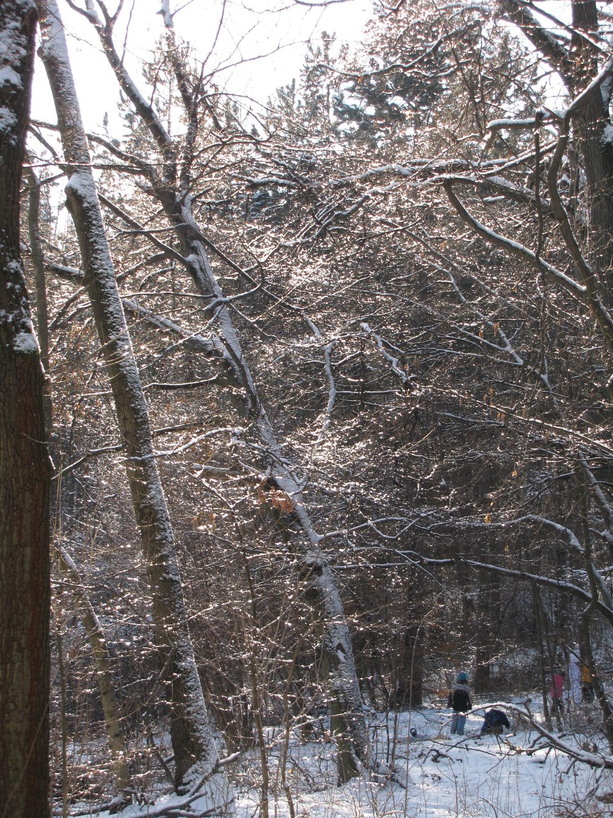 Budapest, tél a budai hegyekben, SzG3