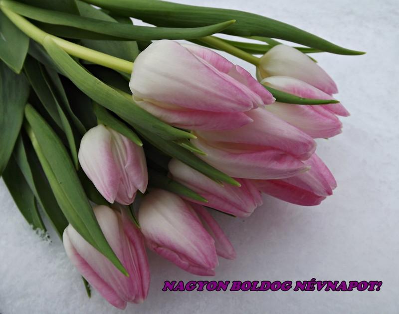 boldog névnapot ági Ági mamának sok szeretettel!   Zsazsa anyo   indafoto.hu boldog névnapot ági