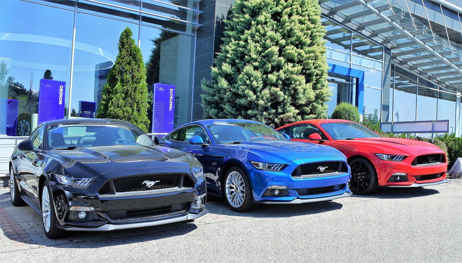 Mustang-sor