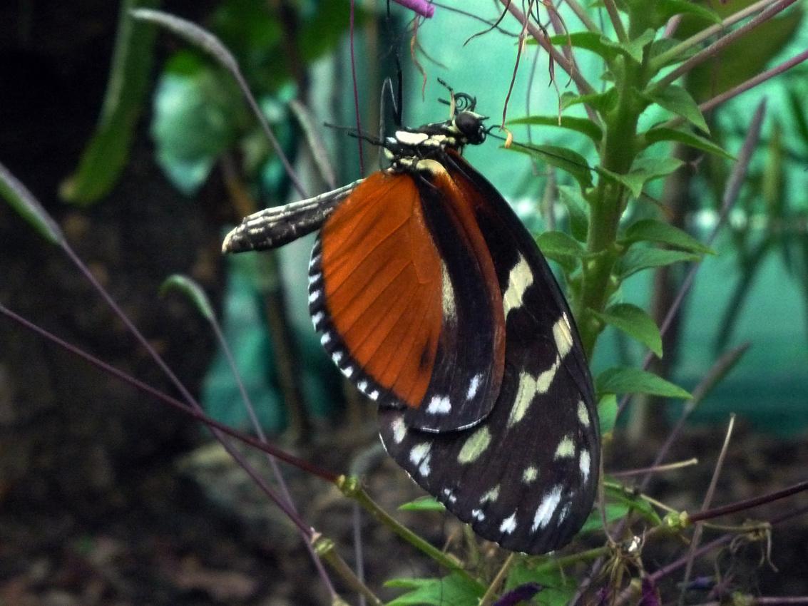 zoo 32 pillango2