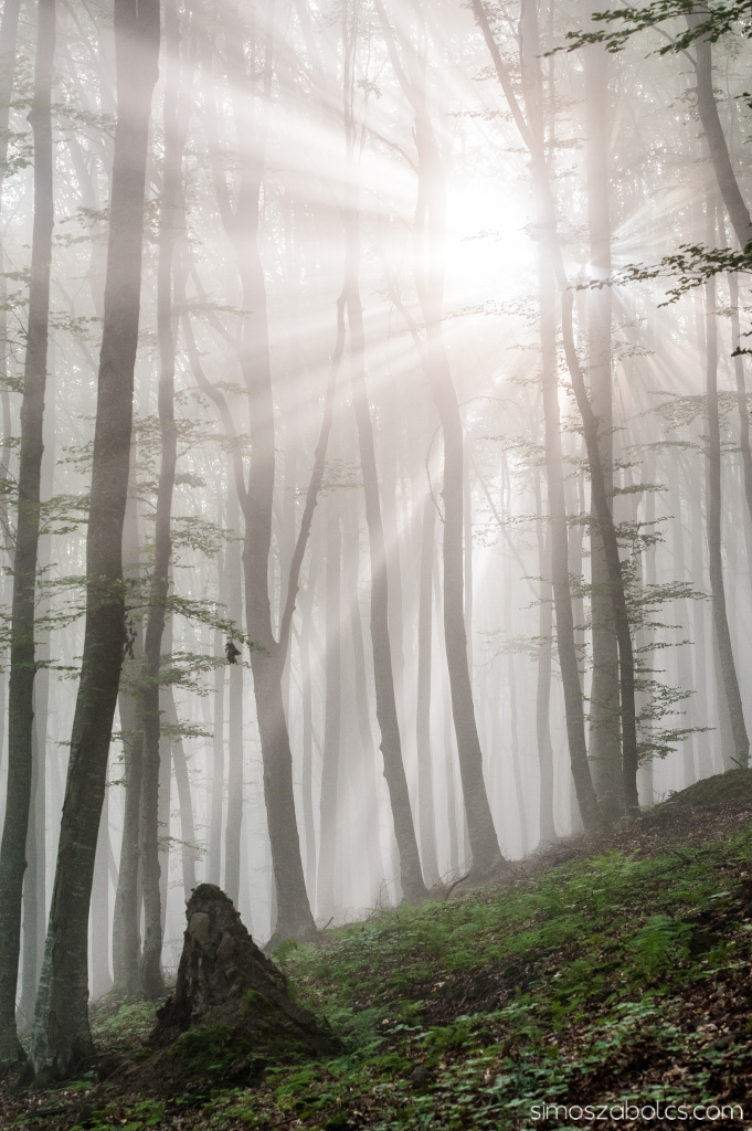 Erdő mélyén