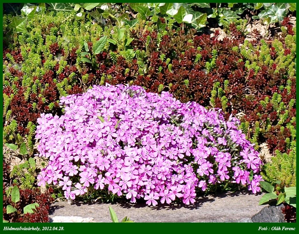 virágok 06