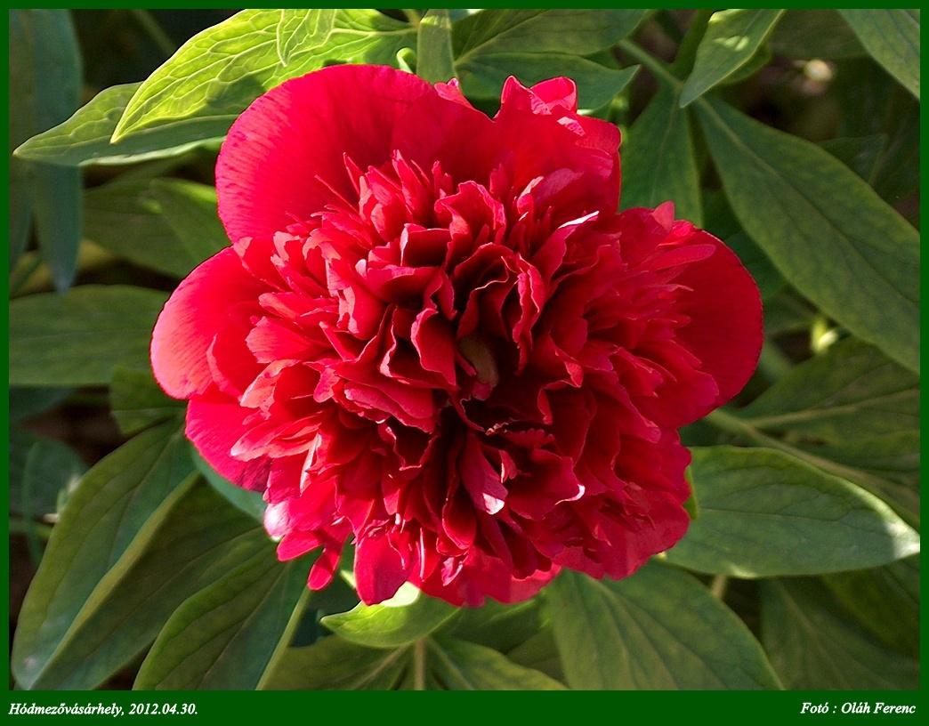 virágok 08